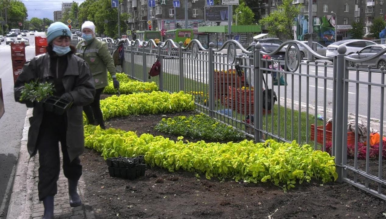 Квіткове панно та різнобарвні змійки: озеленювачі прикрашають проспект Науки