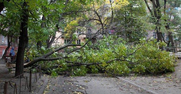 У парках і скверах Харкова через негоду впало п'ять дерев