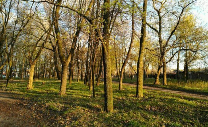 У Київському районі реконструюють Карякін сад і відкриють бібліотеку