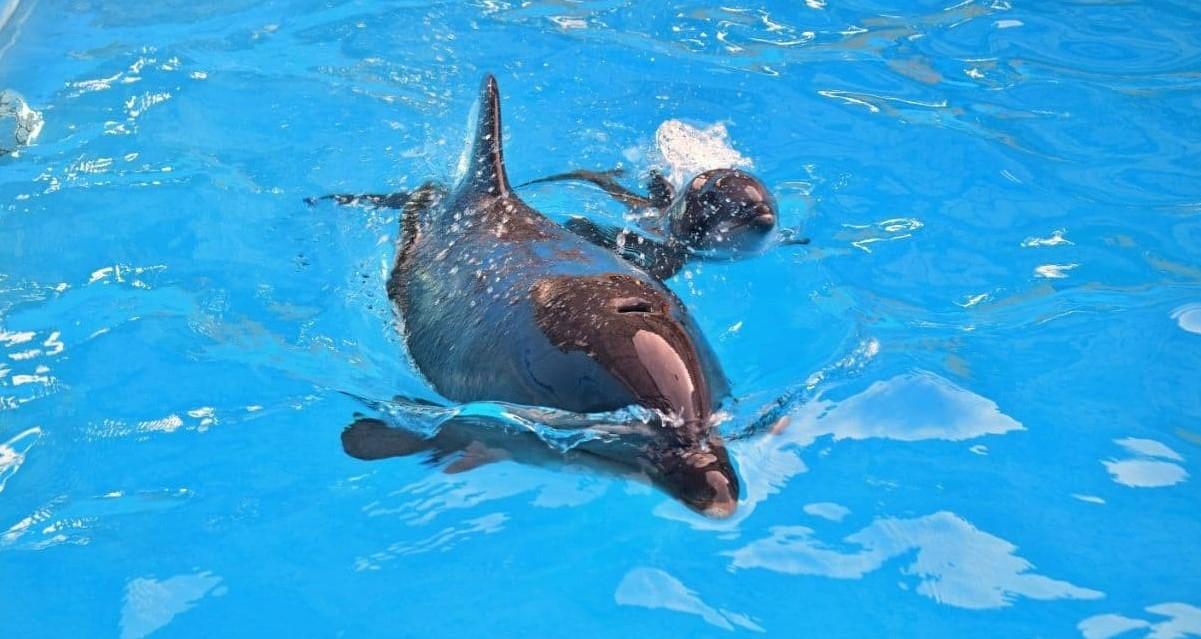 У харківському дельфінарії - знову поповнення