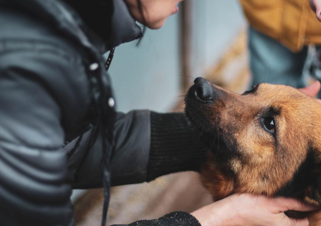 У Харкові з'явилися опікуни над безпритульними тваринами