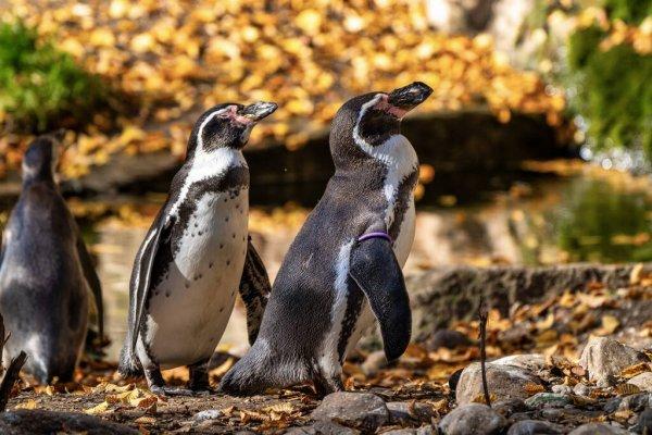 До Харківського зоопарку прибули пінгвіни